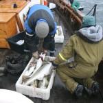 Snorre bløgger fisken som Mangnor har fått